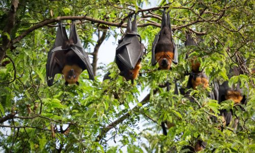 Guano di pipistrello